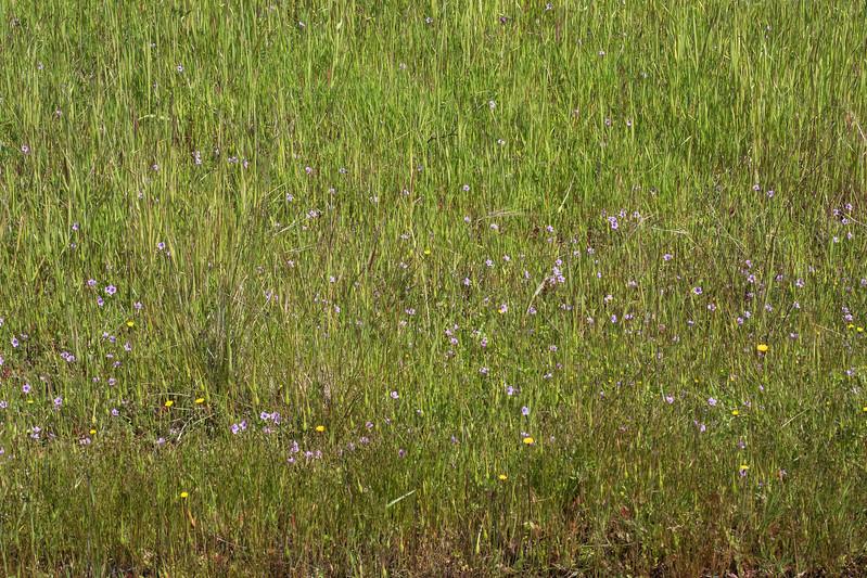Edgewood_Park_wildflowers-12.jpg
