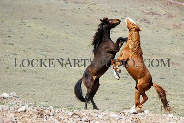 Nevada Mustangs April 2019