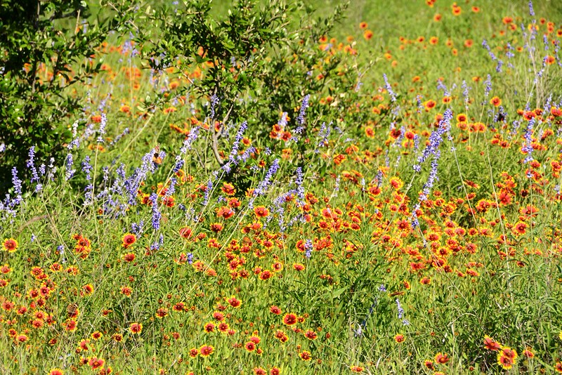 May Flowers - 943a.jpg
