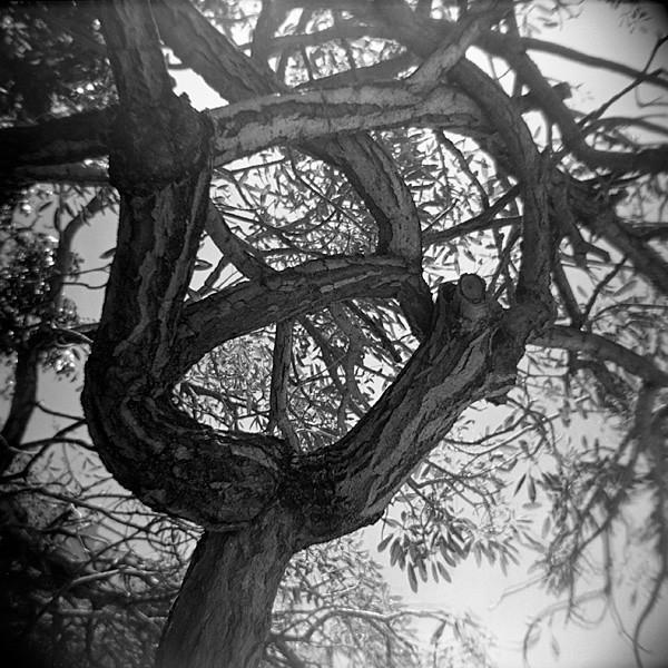 08_tree.jpg