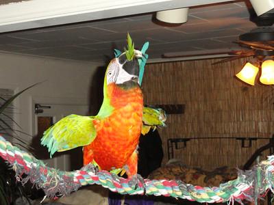 9th  Album ofPast Parrots Rescues in our Sanctuary