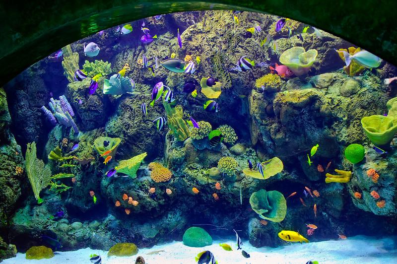 LB-Aquarium-II_19.jpg