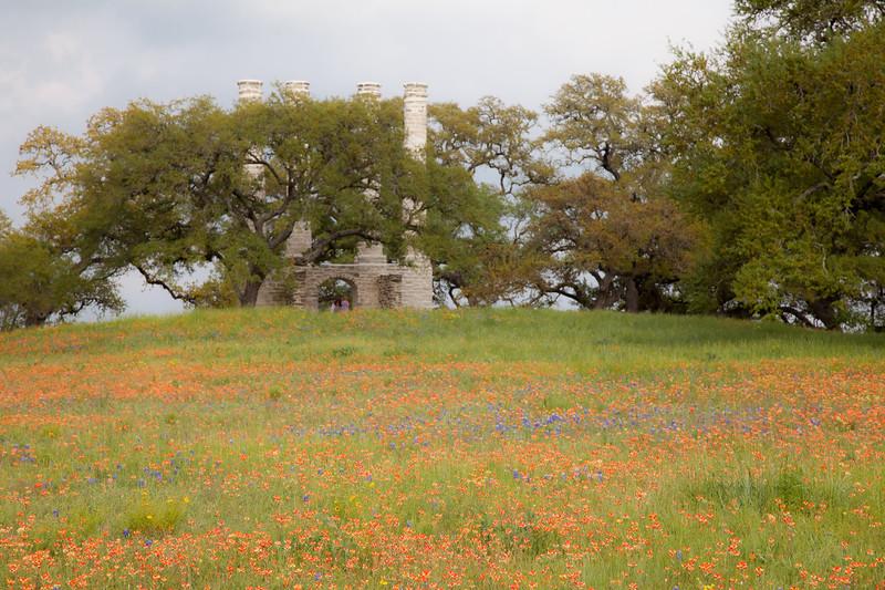 2015_4_3 Texas Wildflowers-8086-2.jpg