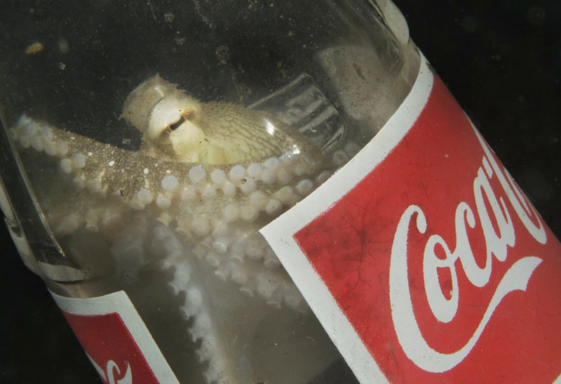 octopus coke.jpg