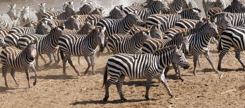 Kenya 2015-02616.jpg