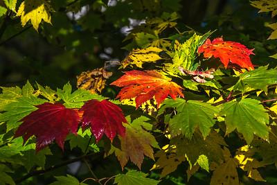 HCC Newsletter 2020 November Fall (Autumn) Colours