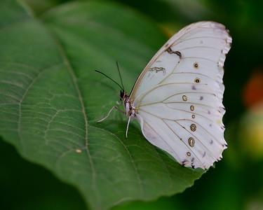 Butterfly World  10/2011