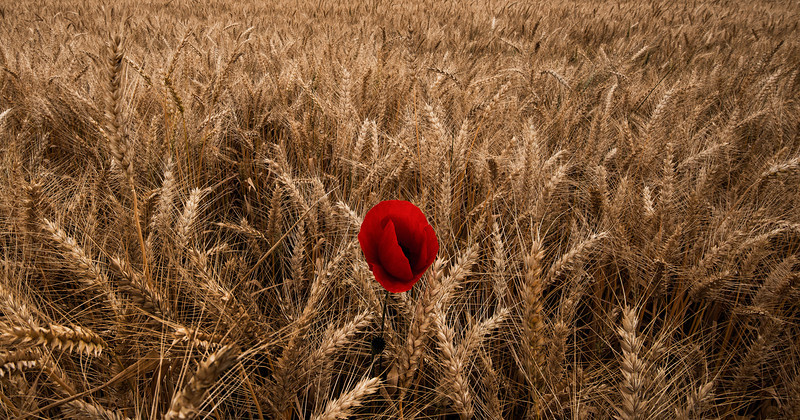Poppie and Barley.