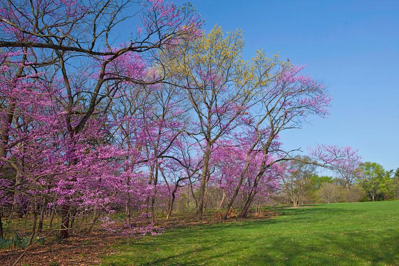 Spring12-1094 corr.jpg