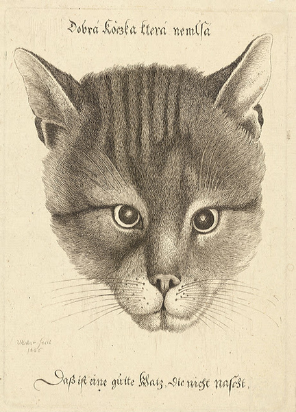 1646 Wenceslas Hollar Head of a Cat etching 17.5 x 12.5 cm.jpg