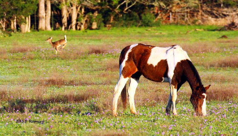 Horse and Deer 3-27-15 063.jpg