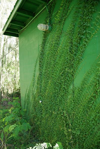 Lower building. Door entrance under vines