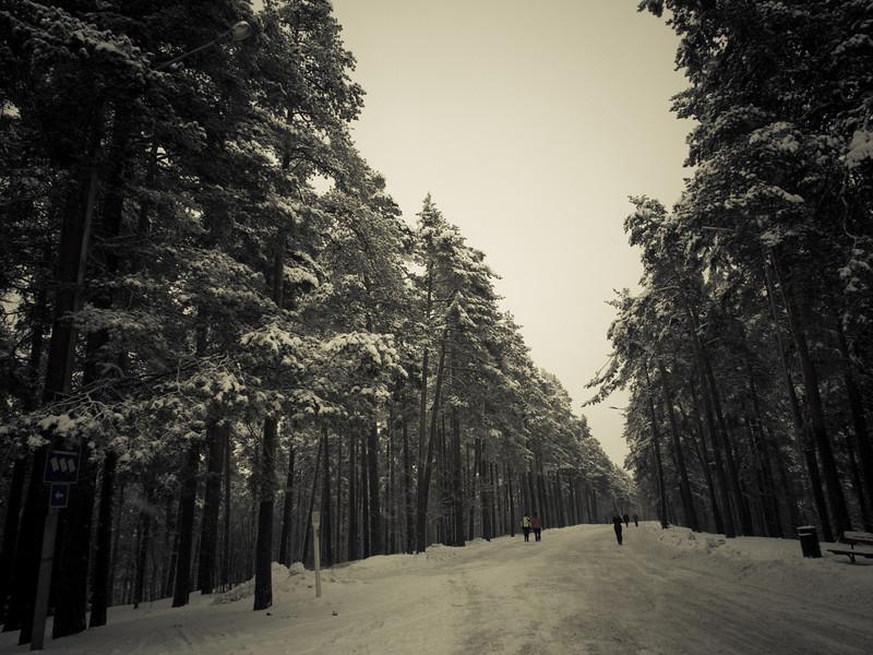 tampere forest2.jpg