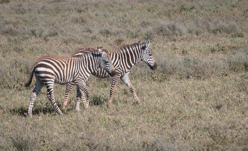 Tanzania_Feb_2018-417.jpg
