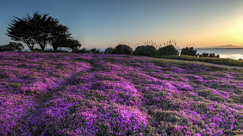 Monterey Sunrise