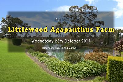 Agapanthus  Farm Run - Wed 25 Oct 2017