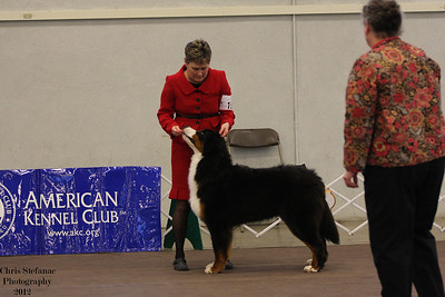 Bred by Exhibitor Dog