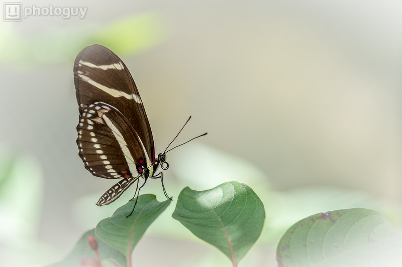 20140628_BUTTERFLY_WORLD (16 of 28)