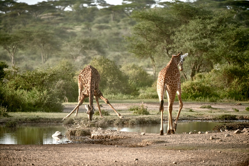 Tanzania 2013 541.jpg