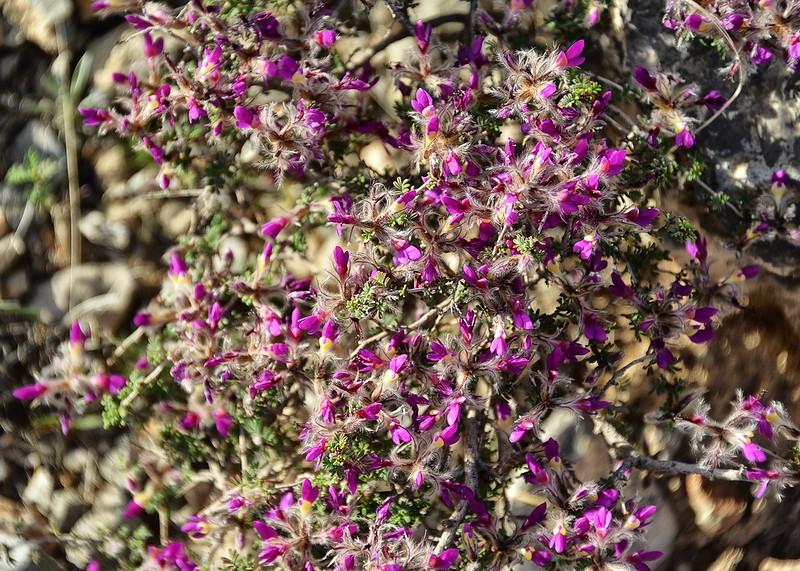 NEA_5686-7x5-Flowers.jpg