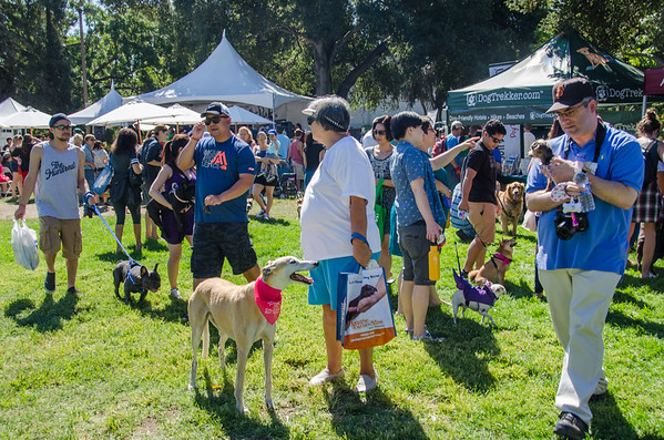 Bark in the Park & Chalk Art Festival