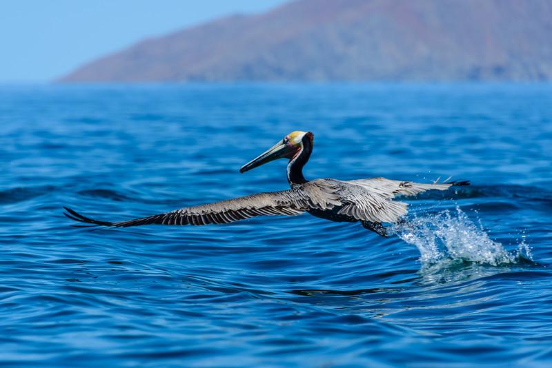 Baja Sea Kayak_3_17 (511 of 1022).jpg