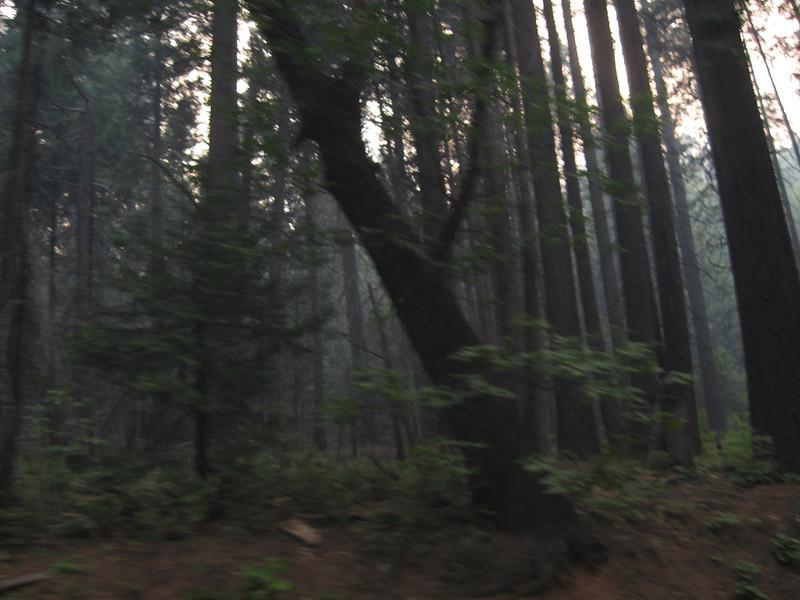 smoke and trees