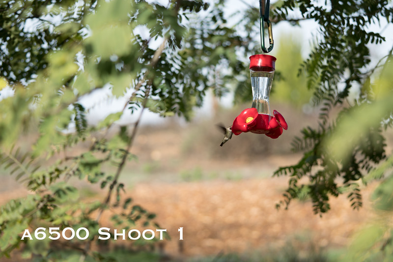 a6500 macro - Shoot 1-9.jpg