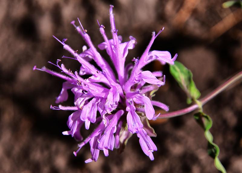 NEA_0282-7x5-Flower.jpg