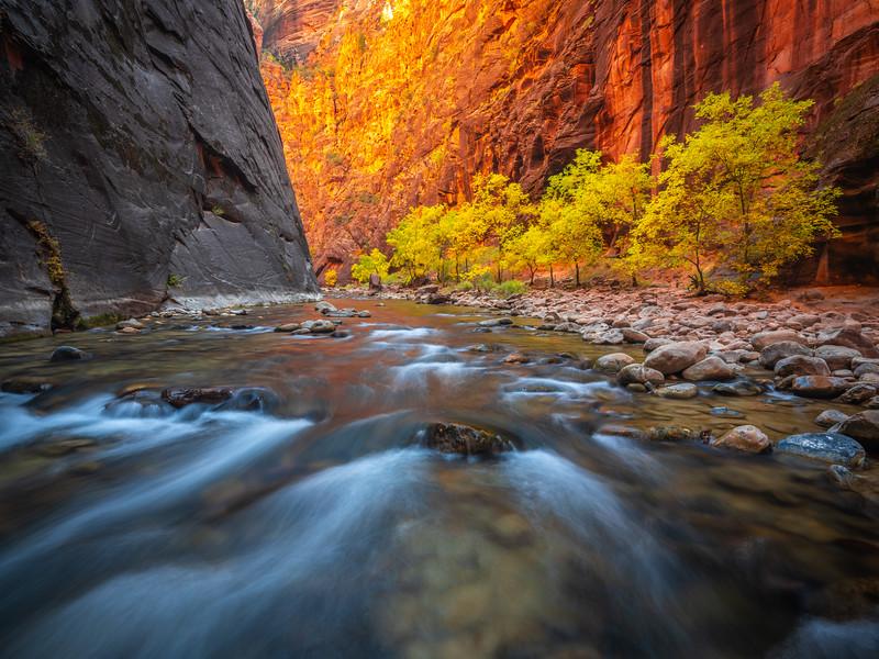 Zion Autumn Parade: The Narrows Zion National Park Fine Art Landscape Nature Photography