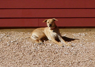 February 2012 A to Z Dog Ranch