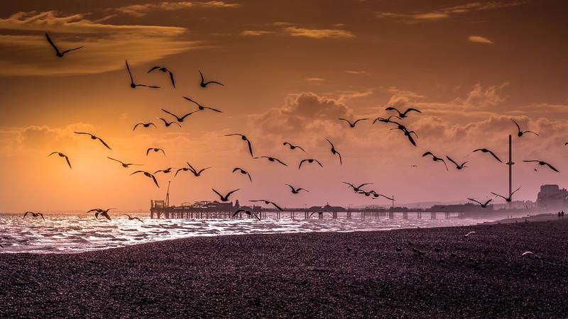 seagulls 3.jpg