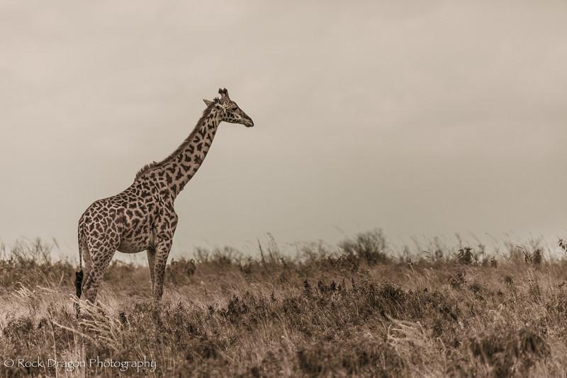 Arusha-28.jpg