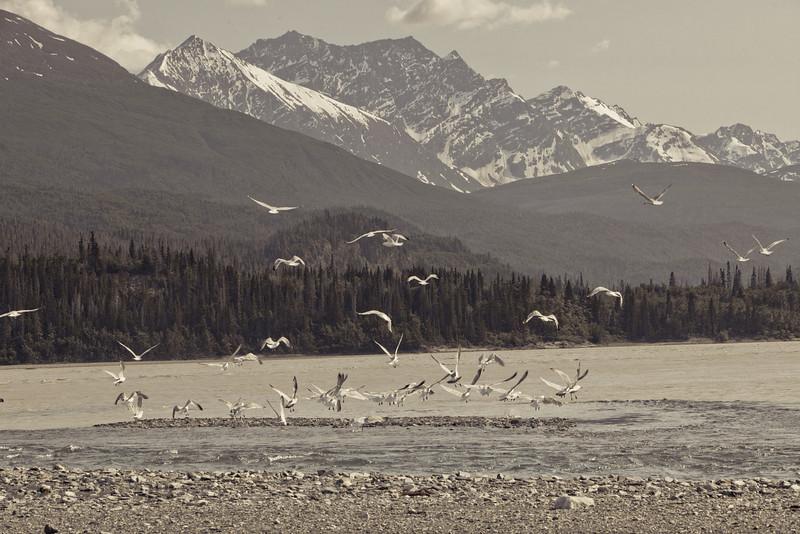 Alaska Copper River-8234.jpg