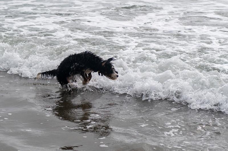 ocean beach quarantine 1161255-8-20.jpg
