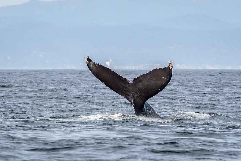 Monterey Bay - Moss Landing, Watsonville, CA USA