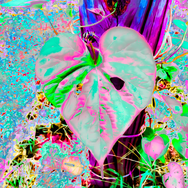 Synesthetic Moonflower