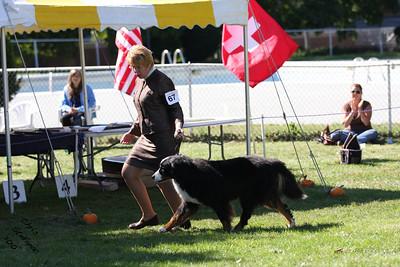 Veteran 11yr+ Dog BMDCW 2010