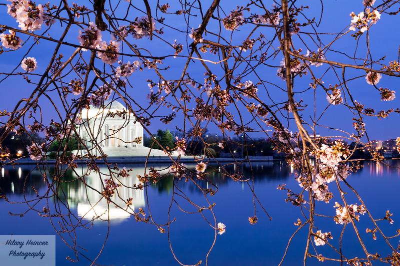 CherryBlossoms2017-12.jpg