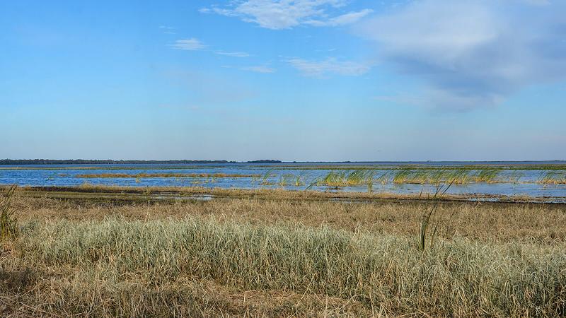 Grasses waving on Lake Kissimmee