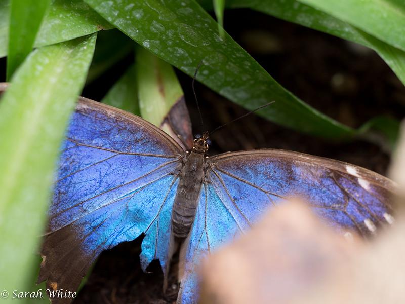 140503_ButterflyHouse_349.jpg