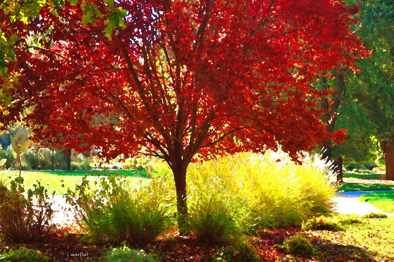 red leaf 10-21-2011.jpg