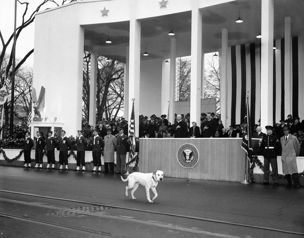 . Vice President Richard  Nixon gets a laugh as a stray dog joins the inaugural parade and walks past the reviewing stand in front of the White House in Washington Jan. 21, 1957. President Dwight Eisenhower looks the other way, apparently unaware of the dog�s present. (AP Photo)