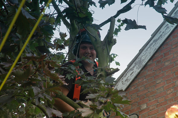Acer Tree Services