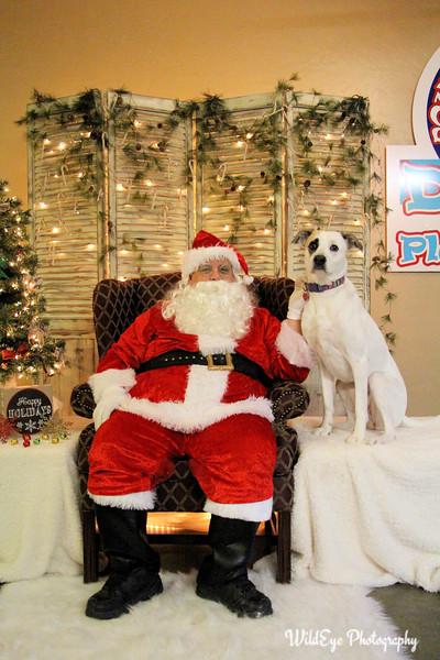 2016 Santa Paws - Oestringer