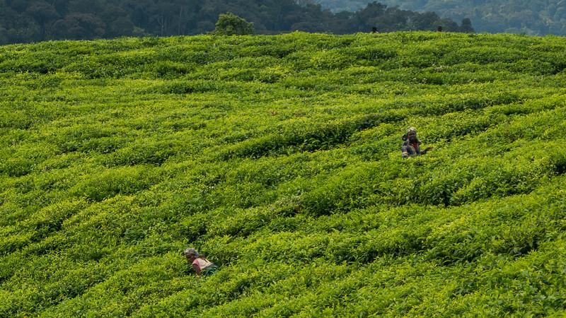 Nyugwe-Rwanda-22.jpg