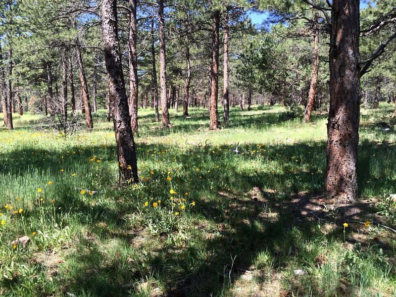 Heil Valley Ranch June 16, 2016 - 9 of 16.jpg