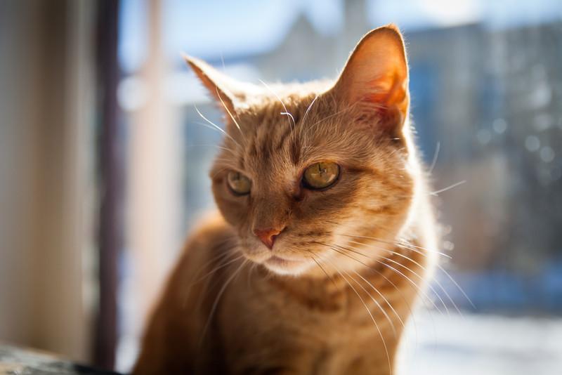 cats-feb-2013-11.jpg