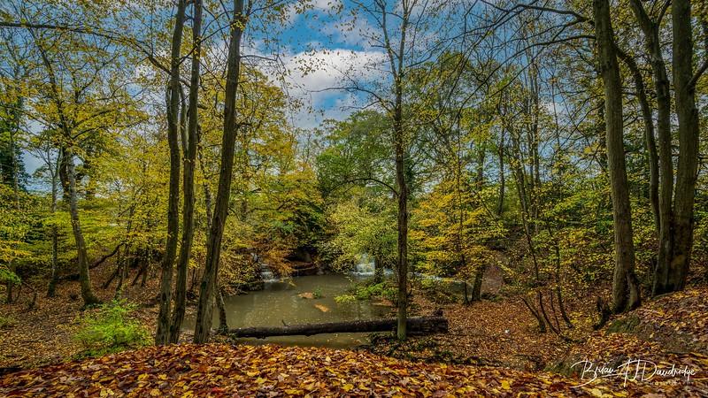 Bedelands_Woodland-5142-Edit.jpg