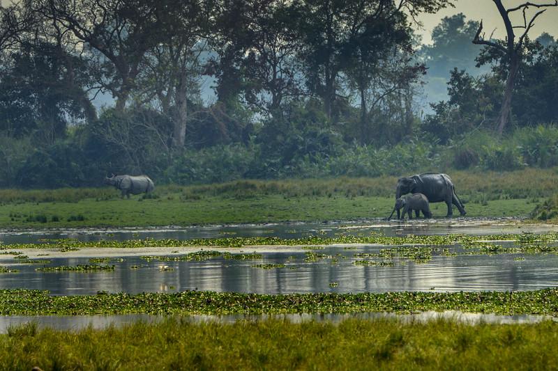 Elephants-and-Rhino.jpg